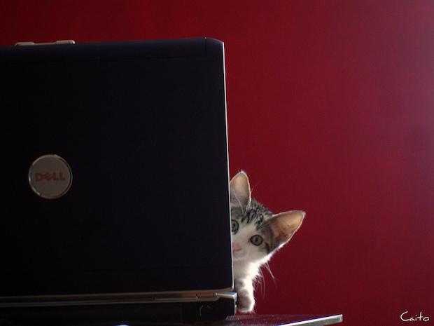 dell_huele_mucho_a_gato-donderepararportatil.com